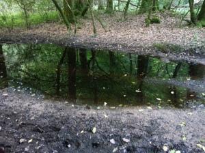 Deciduous woodland on babks of Dart River at Newbridge